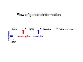 Flow of genetic information