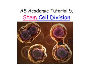 AS Academic Tutorial 5. Stem  Cell Division