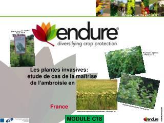 Les plantes invasives: étude de cas de la maîtrise de l'ambroisie en France France