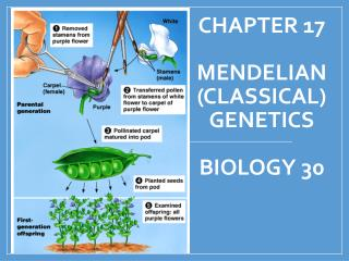 Chapter 17 Mendelian  (Classical) Genetics Biology 30