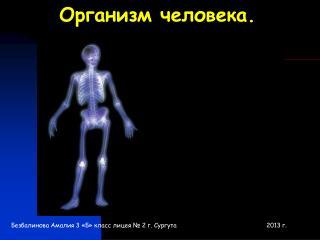 Организм человека.