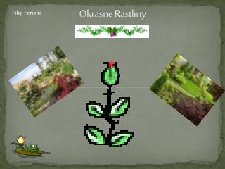 Okrasne Rastliny