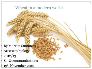 Wheat in a modern world