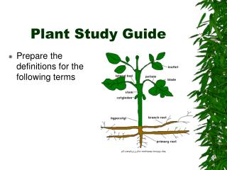 Plant Study Guide