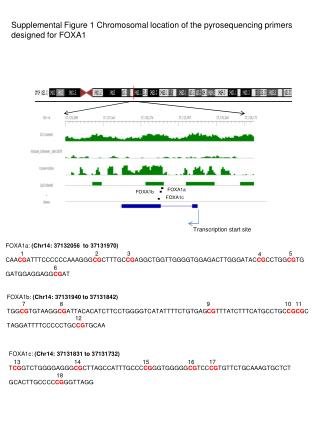 Supplemental Figure 1 Chromosomal location of the pyrosequencing primers  designed for FOXA1