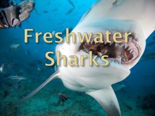 Freshwater  Sharks