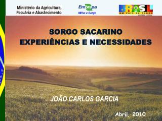 SORGO SACARINO EXPERIÊNCIAS E NECESSIDADES