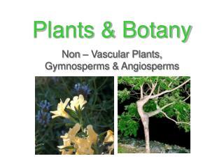 Plants & Botany