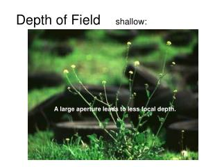 Depth of Field     shallow: