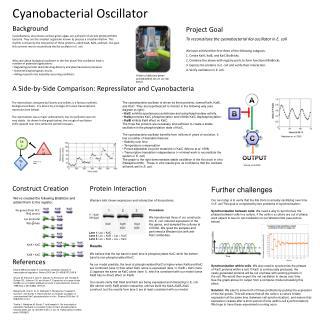 Cyanobacterial Oscillator