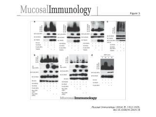 Mucosal Immunology  (2014)  7 , 1312-1325; doi:10.1038/mi.2014.19
