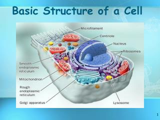 Basic Structure of a Cell