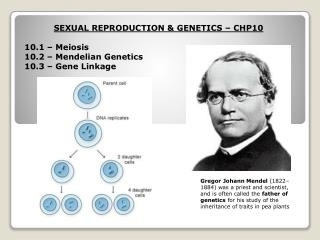 SEXUAL REPRODUCTION & GENETICS – CHP10 10.1 – Meiosis 10.2 – Mendelian Genetics
