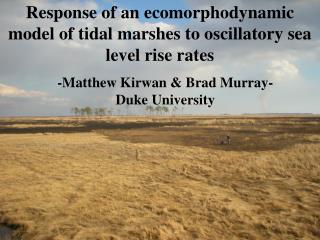 Response of an ecomorphodynamic model of tidal marshes to oscillatory sea level rise rates