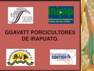 GGAVATT PORCICULTORES DE IRAPUATO.