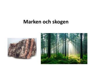 Marken och skogen