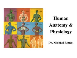 Human  Anatomy &  Physiology Dr. Michael Raucci