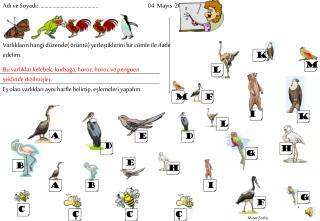 Bu varlıklar kelebek, kurbağa, horoz, horoz ve penguen şeklinde dizilmişler.