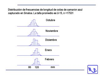 Distribución de hembras maduras de camarón azul por profundidad en Sinaloa