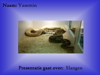Naam: Yasemin