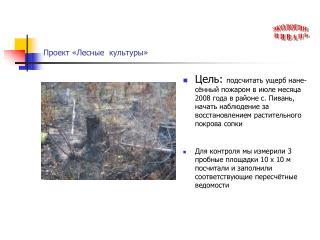 Проект «Лесные  культуры»