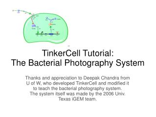 TinkerCell Tutorial: The Bacterial Photography System