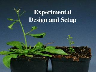 Experimental Design and Setup