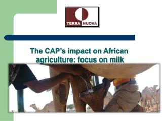 The CAP's impact on African agriculture: focus on milk