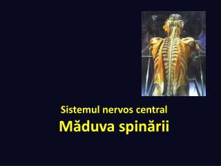 Sistemul nervos  central  M ăduva spinării