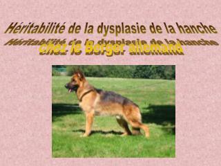 Héritabilité de la dysplasie de la hanche  chez le Berger allemand