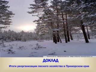 Итоги реорганизации лесного хозяйства в Приморском крае