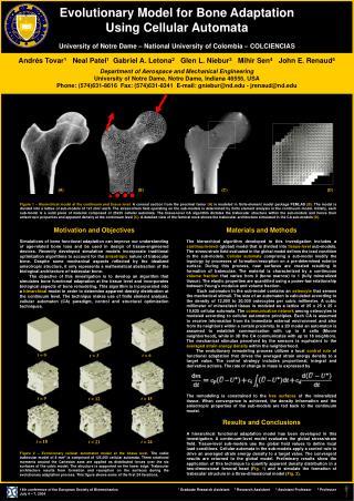 Evolutionary Model for Bone Adaptation  Using Cellular Automata