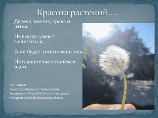Красота растений…..