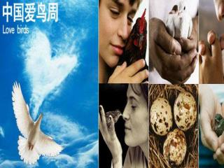 第三课 中国爱鸟周