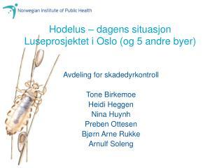 Hodelus   dagens situasjon Luseprosjektet i Oslo og 5 andre byer