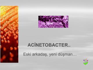 ACINETOBACTER..