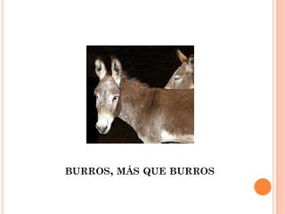 burros, más que burros