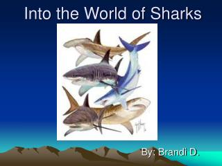 Into the World of Sharks