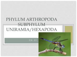 Phylum  arthropoda Subphylum  uniramia / Hexapoda