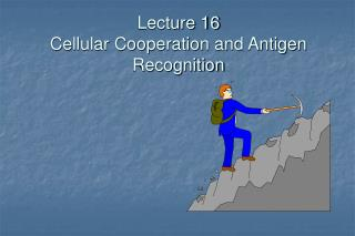 Lecture 16 Cellular Cooperation and Antigen Recognition