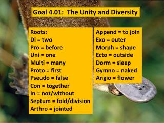 Goal 4.01:   The Unity and  Diversity
