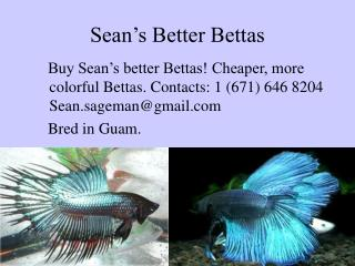 Sean's Better Bettas