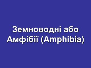 Земноводні або Амфібії  ( Amphibia )