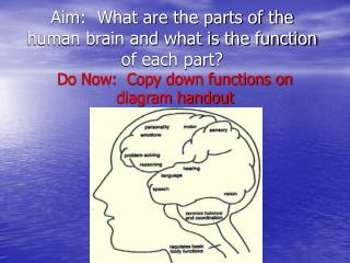 Aim:  What are the parts of the human brain and what is the function of each part