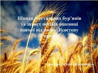 Шкода сегетальних бур'янів та захист посівів пшениці озимої від них в Лісостепу України