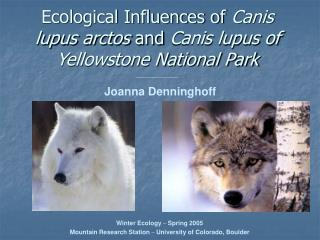 Ecological Influences of Canis lupus arctos and Canis lupus of Yellowstone National Park