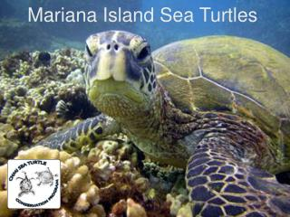 Mariana Island Sea Turtles
