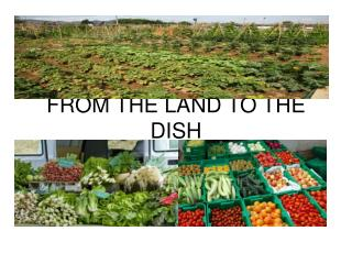 FROM THE LAND TO THE DISH