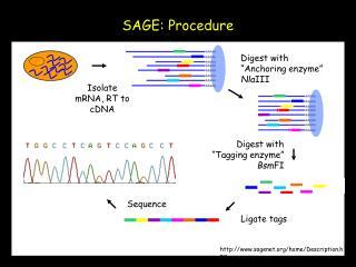 Ligate tags