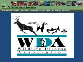 wildlifedisease /